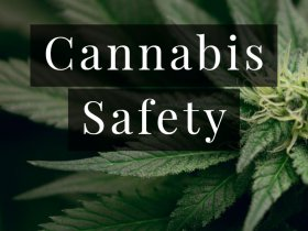 Cannabis Safety