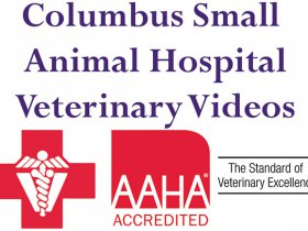 Columbus Small Animal Hospital - Hip Lux