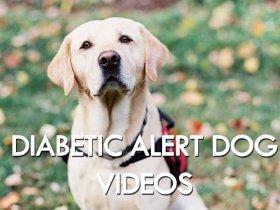 Diabetic Alert Dog Testimony and Action