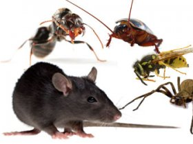 Emergency Pest Control Manly