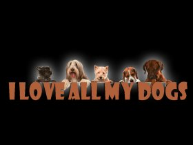 I Love All My Dogs - Video Gallery