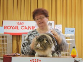 Malta Cat Club - Past Shows