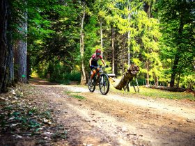 Mountain Bike Sila - Video