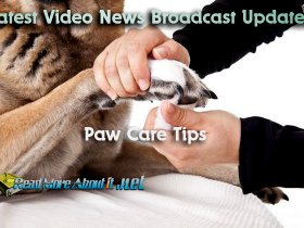 Paw Care Tips for Dogs