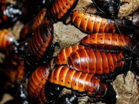 Real Pest Cockroach Control Melbourne
