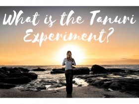 Tanuri Experiment Video Collection