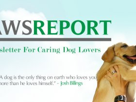 The Paws Report