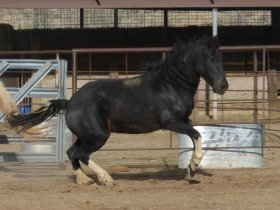 Wildhorse Training