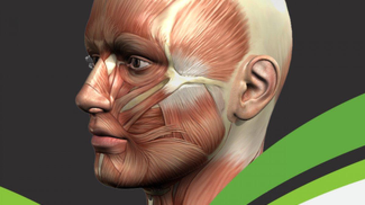 Anatomy Practical Lower Limb
